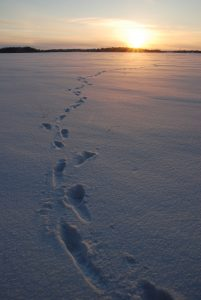 Footsteps across the snow into a sunset